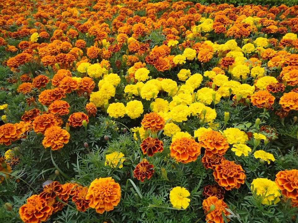 dia de los muertos altares flores 2 • 2020 » Día de los Muertos: Ofrendas, Decoraciones de altares y más 7